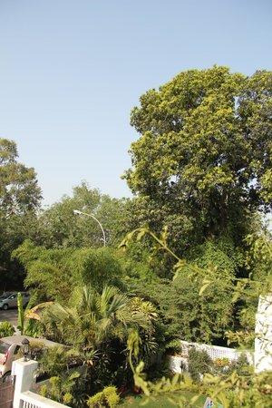 Jorbagh BnB:                   vista dal terrazzo