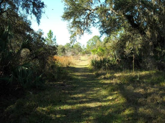 Crystal River Perserve State Park Eco-Walk :                   Inviting, grassy trail