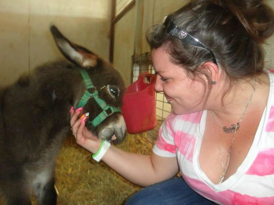 Greater Wynnewood Exotic Animal Park:                                     Newborn baby donkey in Sept 2012