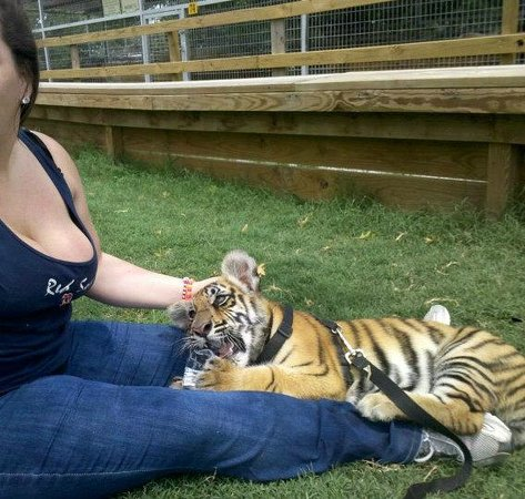 Greater Wynnewood Exotic Animal Park:                                     baby brutus