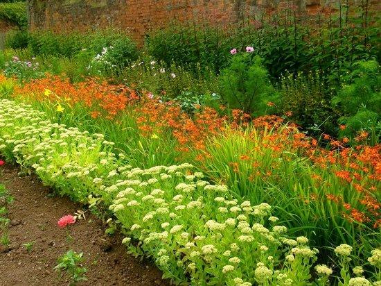 Shugborough:                   Flower beds