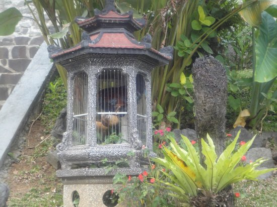 Beji Ubud Resort:                                     House rooster down few stairs to large pool