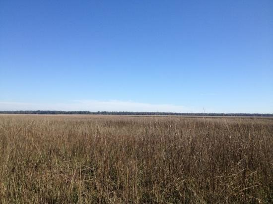 Crooked River State Park : the marsh