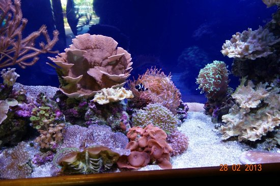 Waikiki Aquarium: Aquarium