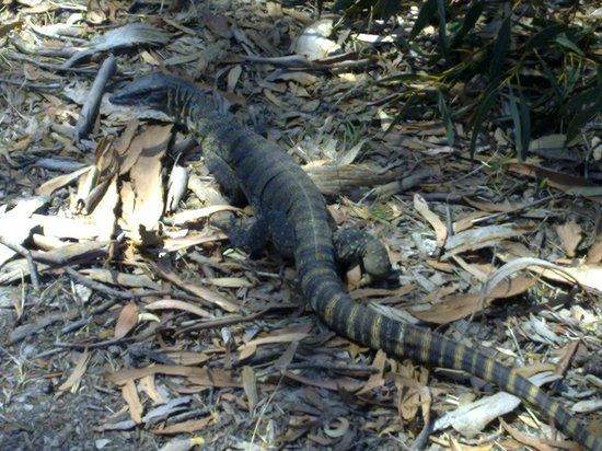 Kangaroo Island Bush Getaway Adventures