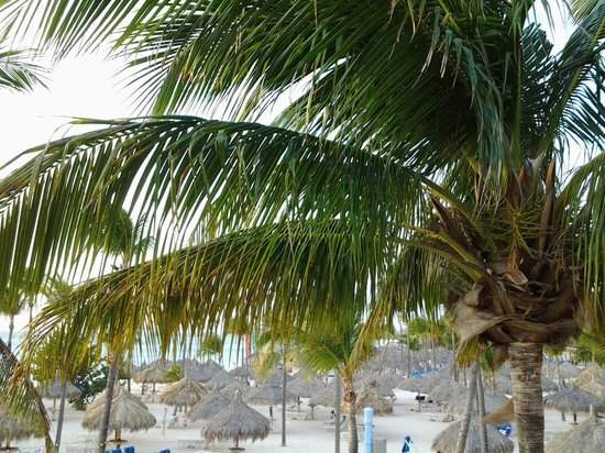 Marriott's Aruba Surf Club:                   beach at Marriott
