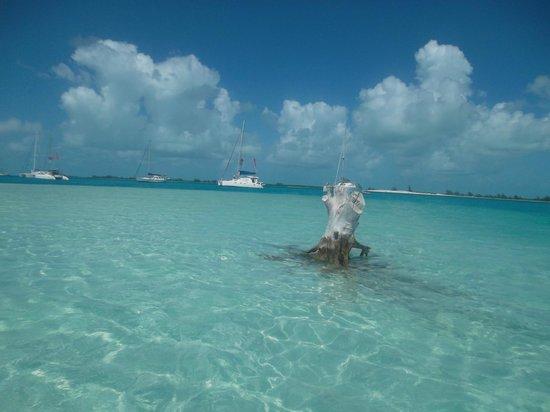 Arbol en Playa Sirena