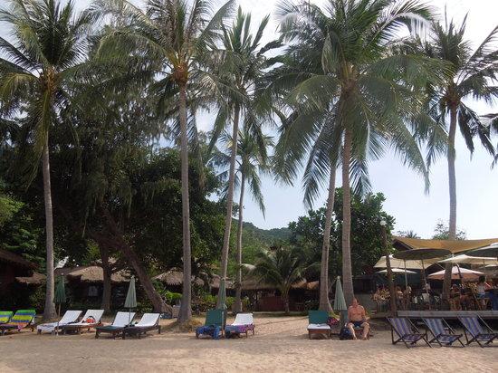 Palm Leaf Resort: beachfront and sunbeds of Palm Leaf