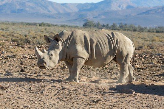 โรงแรม อินเวอร์ดูร์น เกม รีเสิร์ฟ: Rhino
