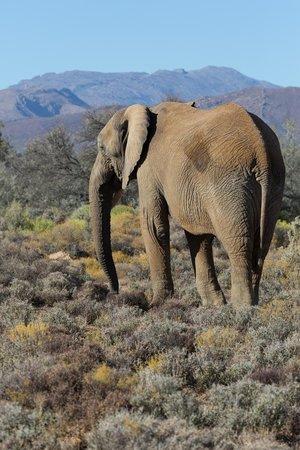 Inverdoorn Game Reserve: Elephant