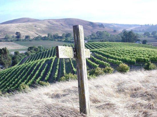 Stolo Family Winery & Vineyards : getlstd_property_photo