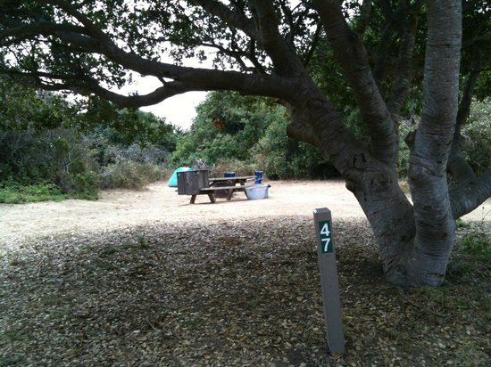 Manresa State Beach:                   Campsite #47: example of a large, semi private site, back off of the trail, no