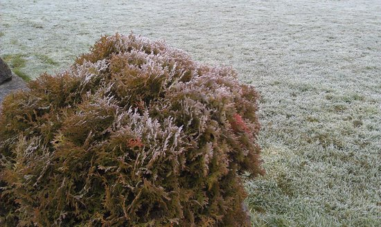 morning frost - Puddings Barn