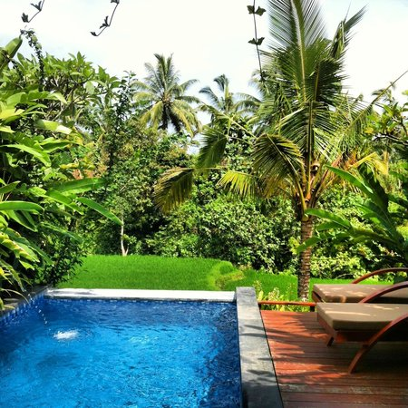 Ubud Green:                   View from Bayu 1 pool