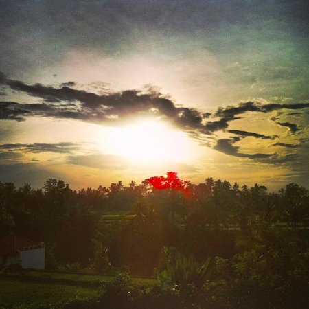 Ubud Green:                   View from Firefly restaurant
