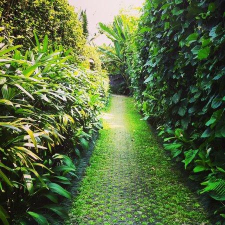 Ubud Green:                   Walkway to Bayu 1
