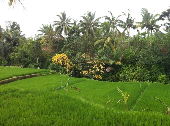 ‪‪Ubud Green‬:                   View from Bayu 1 pool