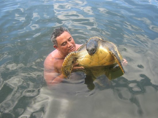 Vacations Beach Fales:                   Hubby Swimming with the Turtles