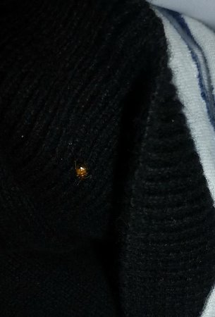 Magnums Backpackers:                                                       bed bug on someone's clothes