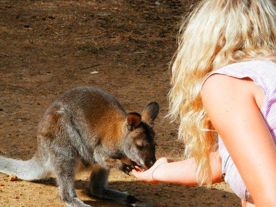 ออโรราโอโซนโฮเต็ล:                   Linda feeding one of the locals