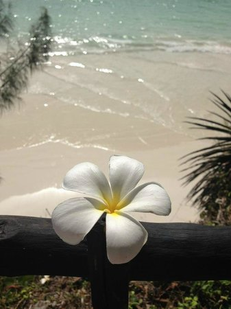 Baobab Beach Resort & Spa:                   Beach and baobab flower