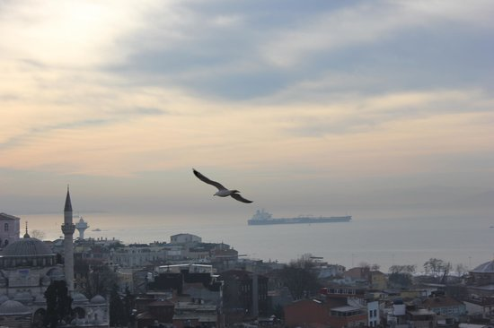 Aziyade Hotel:                   The view from my room at the Marmara Sea, Sokullu Paşa Camil and a seagull