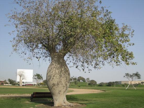 Parc Aspire :                                     Interesting tree in Aspire Park