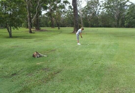 Tewantin-Noosa Golf Club:                                     Local spectator - lots of recent rain but course okay