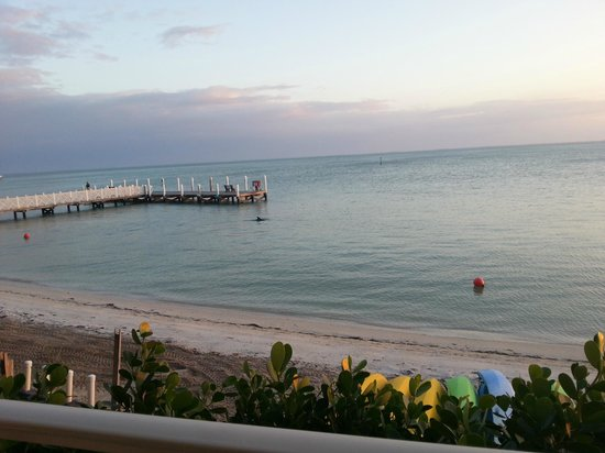 South Seas Island Resort:                   Dolphin viewed from the room balcony!!!