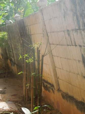 Chaweng Beachcomber:                   leaning boundary wall