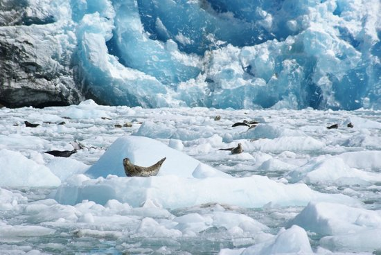 Sawyer Glacier Picture Of Tracy Arm Fjord Juneau