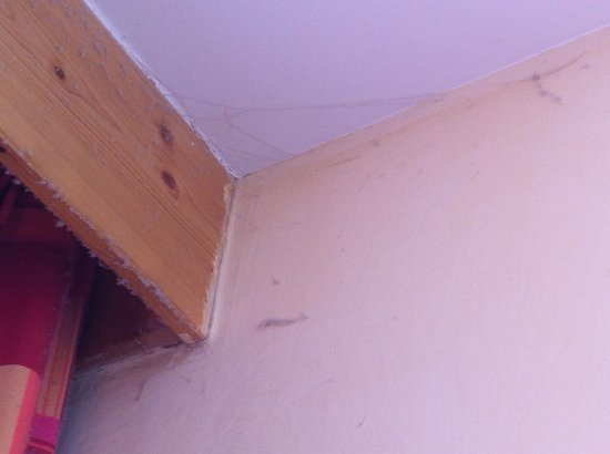Pierre & Vacances Residence Les Néréïdes :                   Toile d'araignée