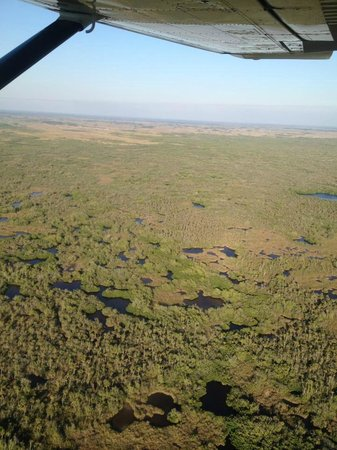 Wings Ten Thousand Islands Aero Tours:                   Looks closely! You will see the flamingo, roseate spoonbills, deer, wild boar