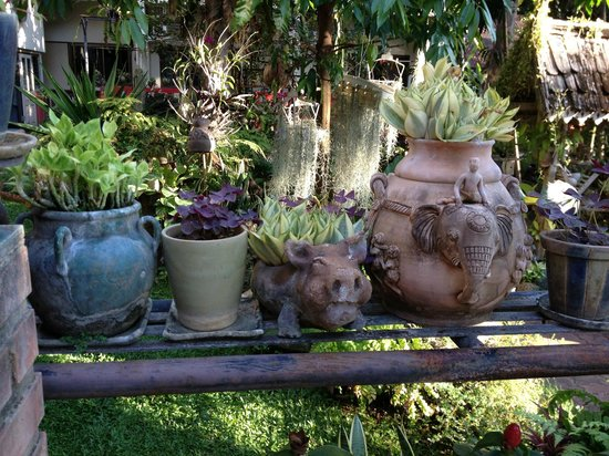 River View Lodge :                   Adorable gardens