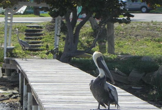 Driftwood Motel:                   Photo from the dock: a birder's paradise on the Indian River!