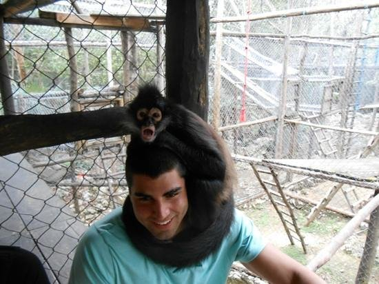 The Jungle Place - Tours:                   perching monkey