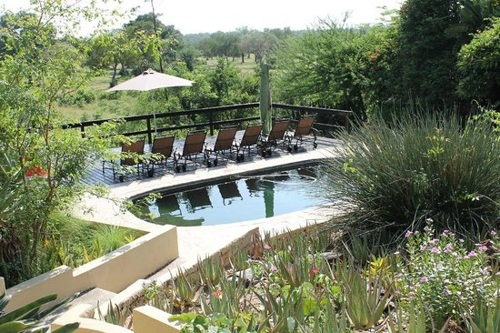 Elephant Plains Game Lodge: Einer der beiden Pools