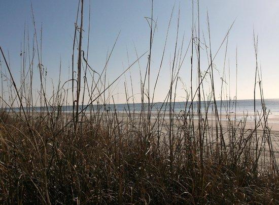 هامبتون إن آند سويتس ميرتل بيتش:                                     grassy dunes                                  