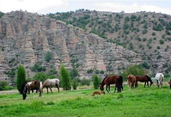 Gila Hot Springs Ranch: The Ranch Horses