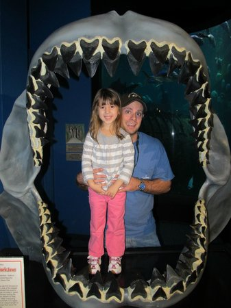 North Carolina Aquarium at Pine Knoll Shores:                   Giant shark jaws!