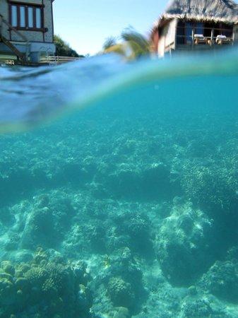Likuliku Lagoon Resort:                   Al lado de las cabañas
