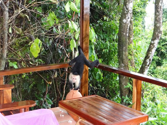 La Paloma Lodge:                   Aapje op ons balkon
