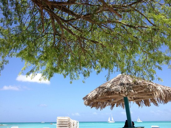 The Mill Resort & Suites Aruba:                   the awsome beach with trees for shade