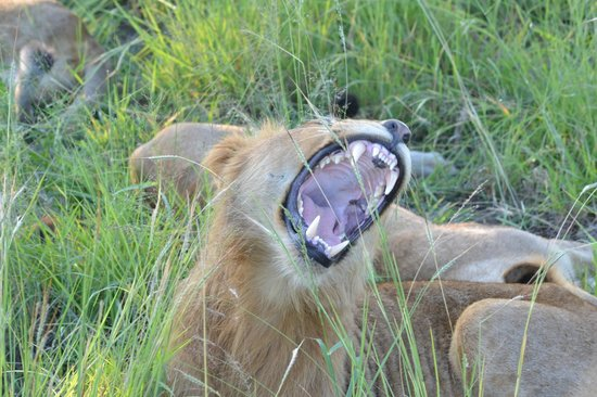 Chitwa Chitwa Private Game Reserve:                   Yawwwwwn