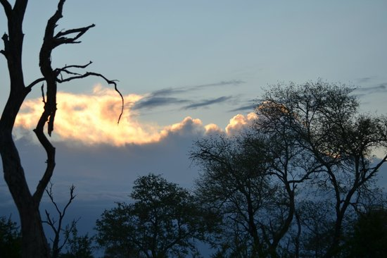 Chitwa Chitwa Private Game Reserve:                   silver lining in the bush