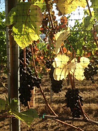 Access Oregon Wine Tours: Meet the Winemakers