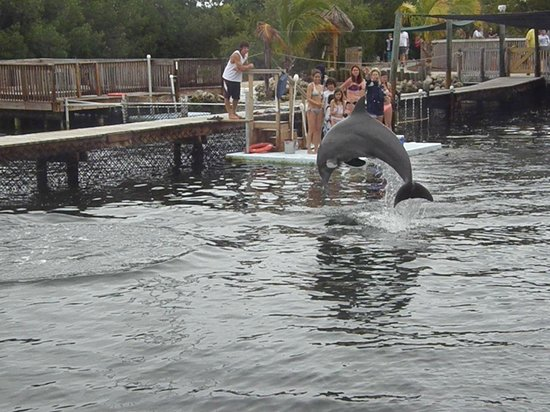 Dolphin Research Center:                   Hammin it up