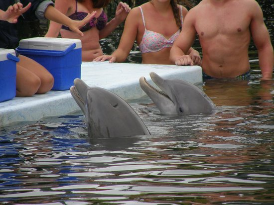 Dolphin Research Center:                   Dolphins seem to enjoy people
