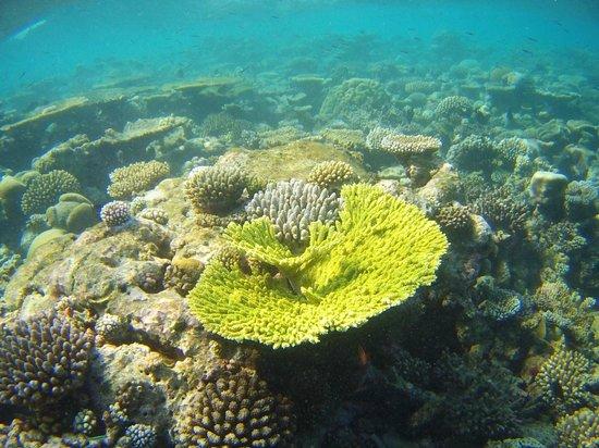 Eriyadu Island Resort:                   Коралловый сад на домашнем рифе
