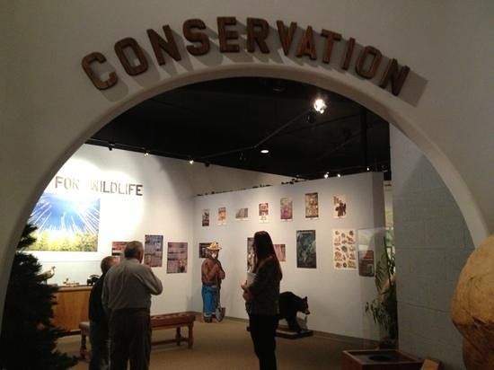 International Wildlife Museum :                   such a unique educational visit